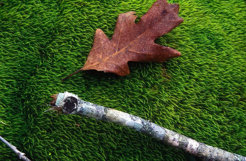 leaf on moss.jpg