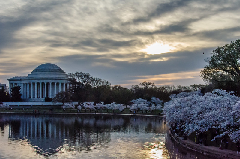Cherry Blossom Tidal Basin Early Morning -14.jpg