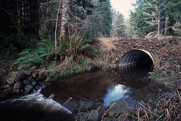 A new culvert that alows for fish passage on Elk Creek.