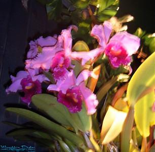 Orchids 2007
