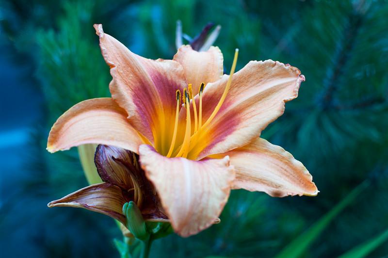 flower_275.jpg
