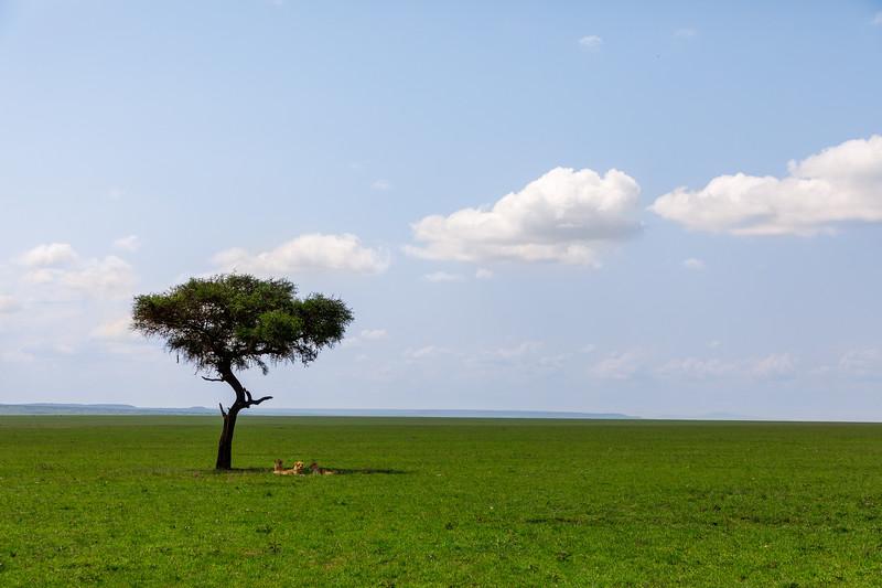 Kenya_PSokol_0619-1743.jpg