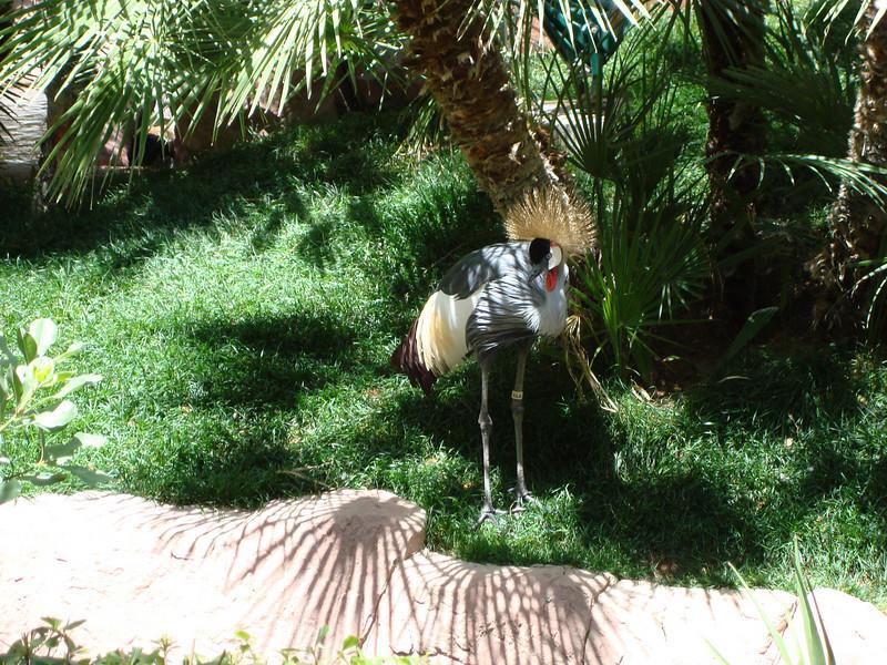 Bird at the Flamingo