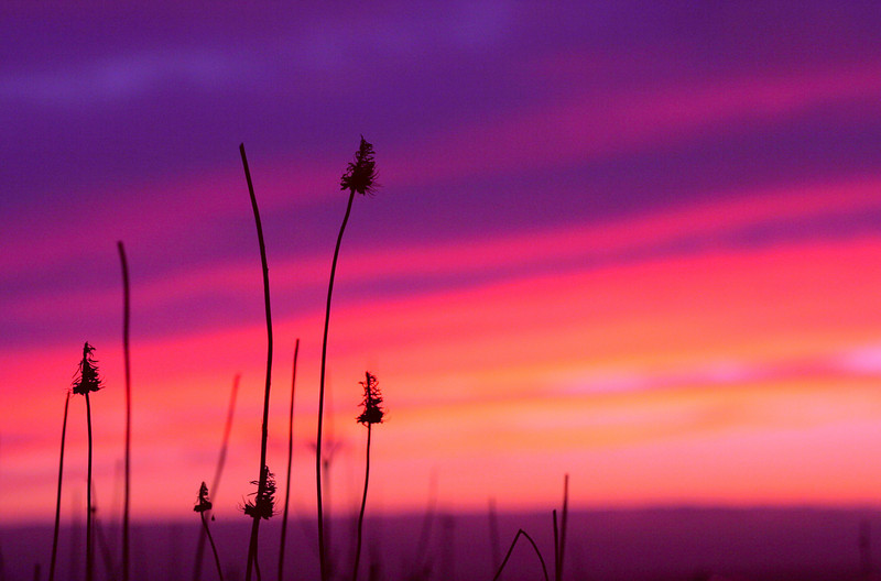 Weeds and sunset. Colors adjusted in photoshop.