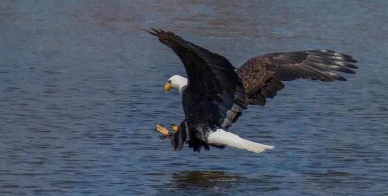 smug eagle 8.jpg