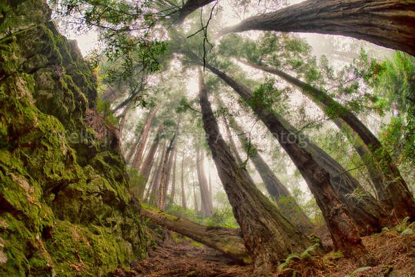 Dipsea Trail, Marin Headlands, California