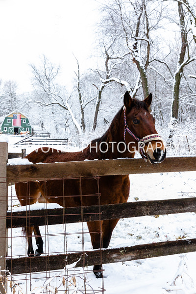 202101032021_1_3 Neighborhood_Horses_Snow_Barn_Trail036--1.jpg