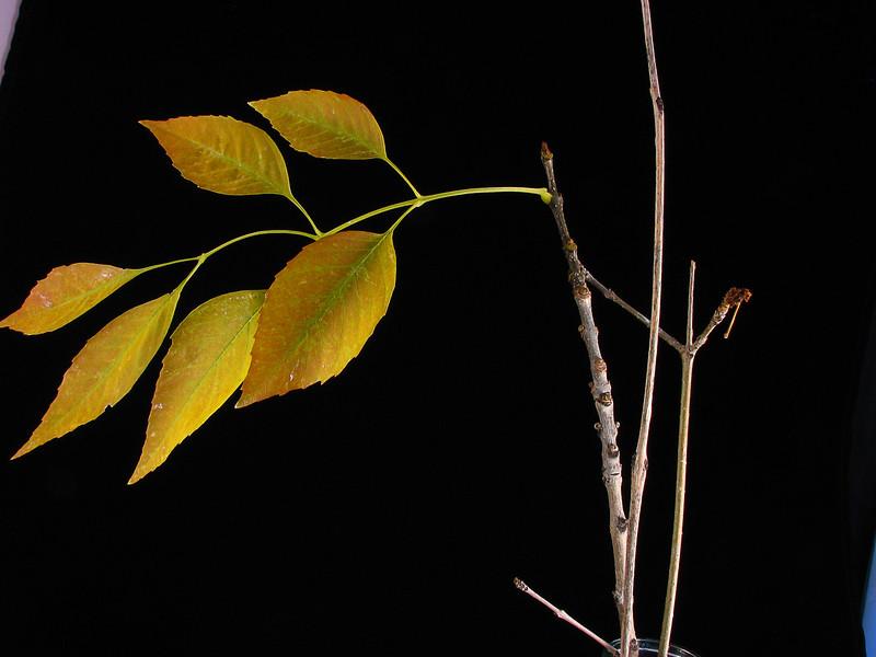 Autumn Leaves on Tree 1.jpg