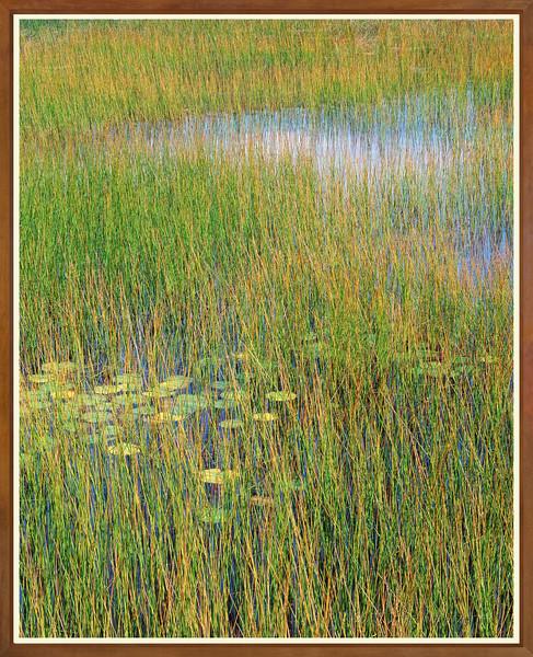 Reeds & Cloud Reflections I
