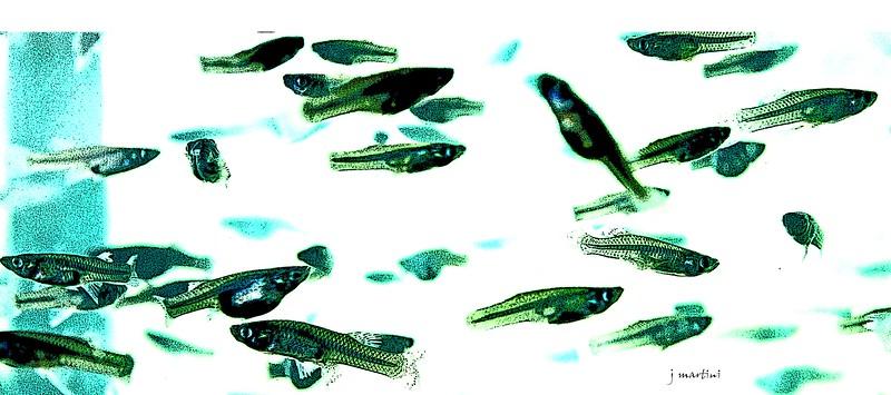 fish wall paper 7-26-2012.psd