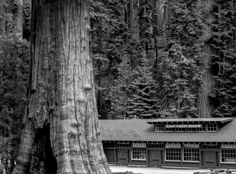 sequoia parents-9235.jpg
