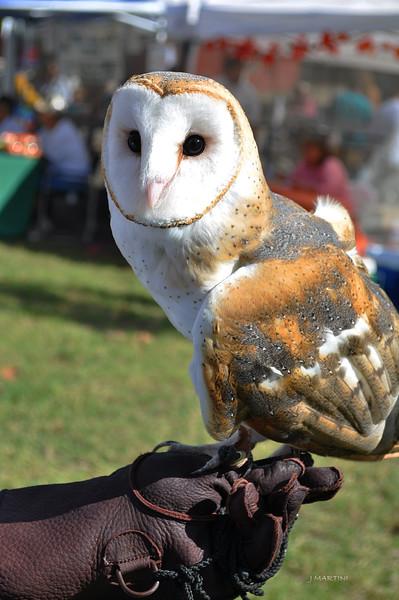RESCUE OWL 2 10-26-2014.psd