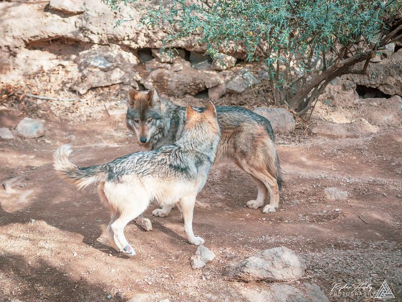 Arizona-Sonora Desert Museum-184.jpg