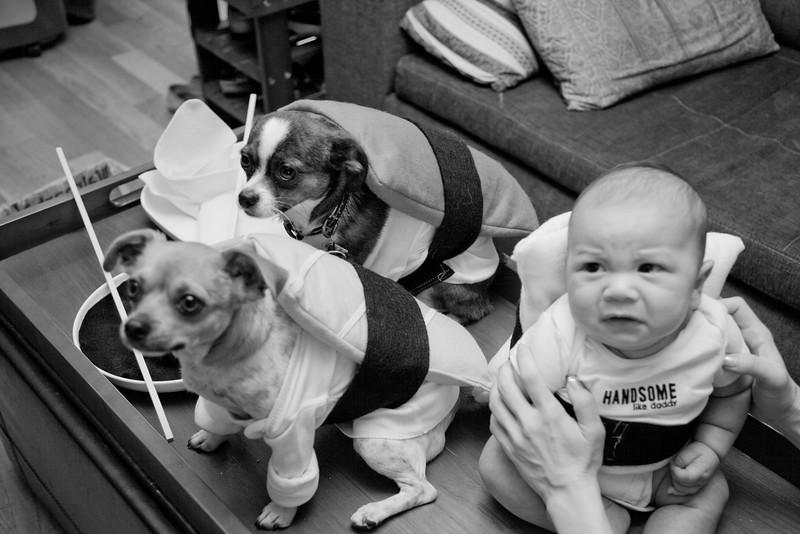 Dog-sushi-halloween-72.jpg