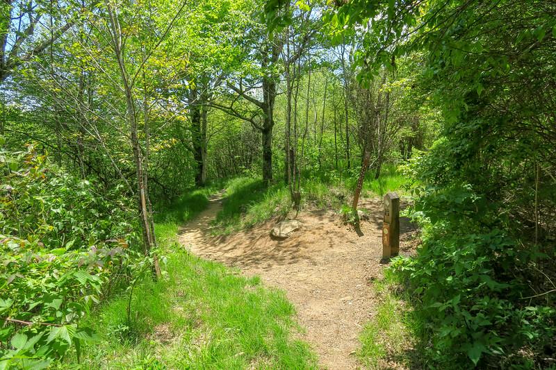 Mountains-to-Sea/Graveyard Ridge Trail East Junction -- 5,200'