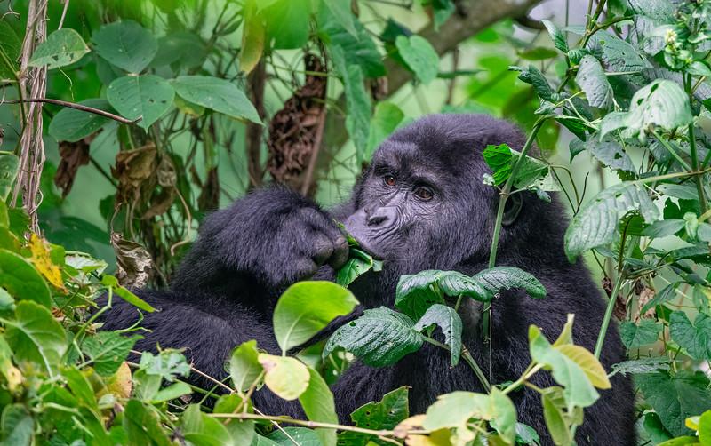 Uganda_T_Gor-2210.jpg