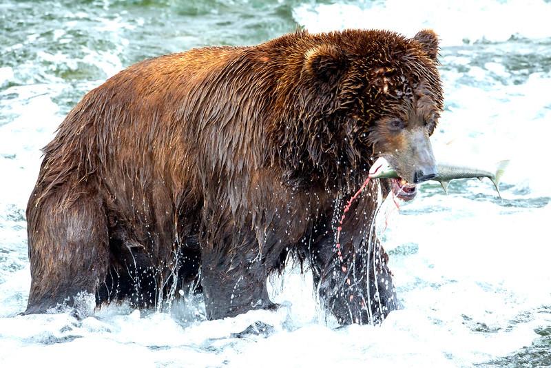 Alaska_2013_FH0T8379-2.jpg