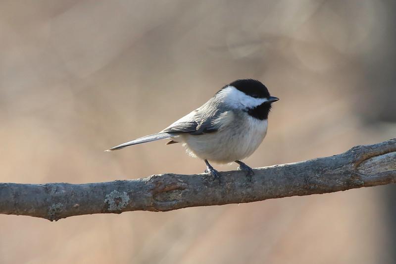 Birds-106.jpg