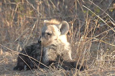 7-16-2015 Leopard Hills - Buffalos