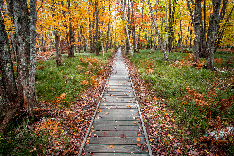 118.Rick Ohnsman.1.Acadia Autumn Path.jpg