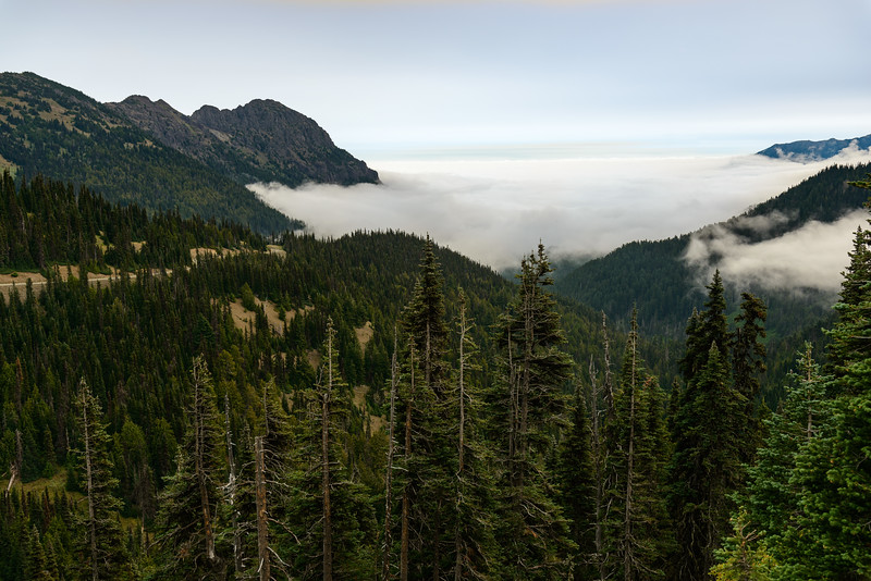 Hurricane Ridge, Olympic National Park, Washington