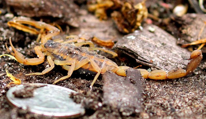 Scorpion 6-4-15 015.jpg