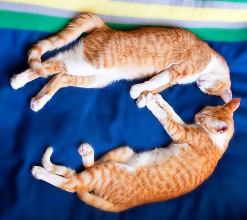 Kittens - Print Test