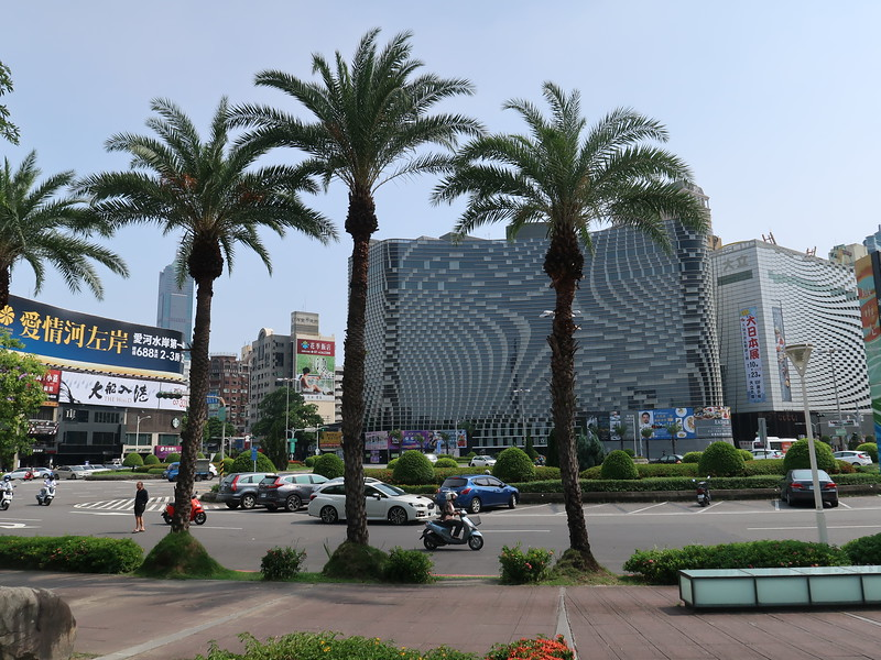 IMG_9971-palm-trees.JPG