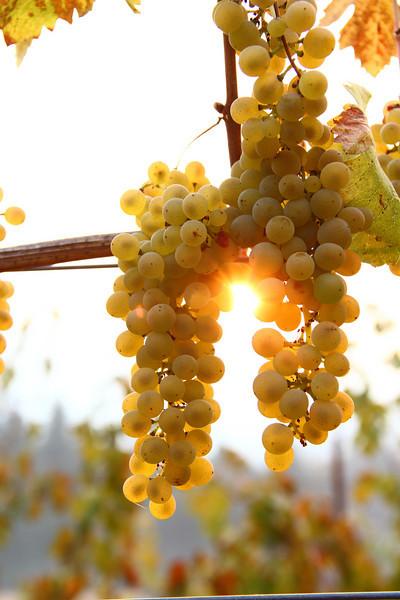 Butter Creek Winery