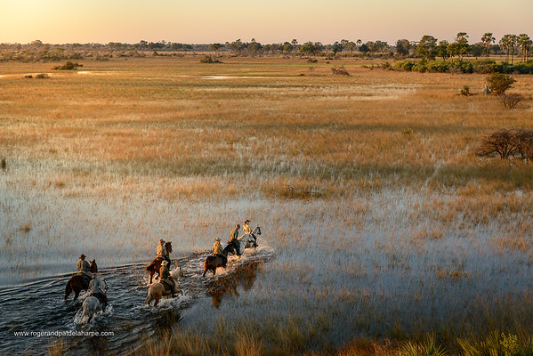 Okavango Horseback Riding