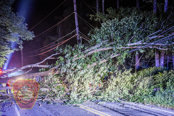 Schuylkill County - N. Union Twp. - Tree on Car - 08/05/2018