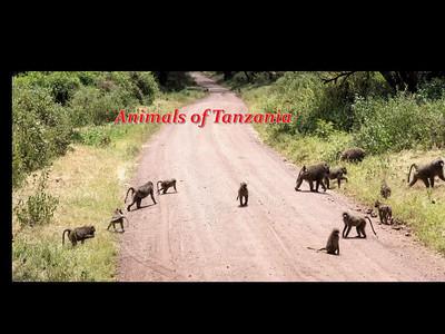 Animals of Tanzania
