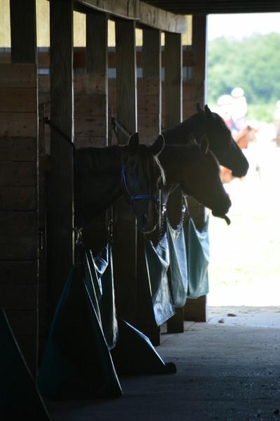 Thursday's Equestrian Album