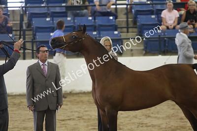 2011 Region 14 Arabian Horse Show