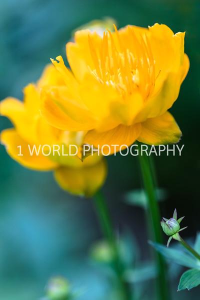 Spring Flowers 2018_Cantigny Flowers_Cantigny-109-15.jpg