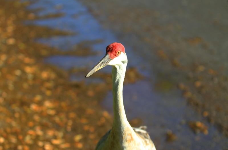 cranes-3-4-19_4780.jpg