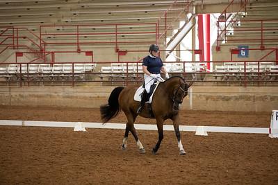 Horse 461