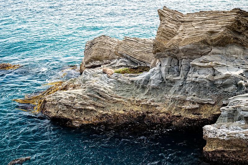 Cape Palliser Seal Colony