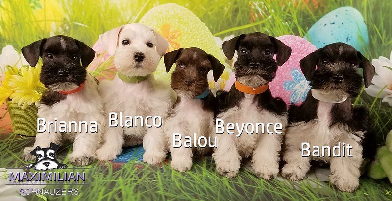 Mystic pups 035.jpg