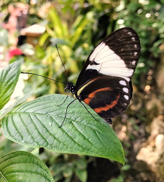 12_8_19 Butterfly Delicately Landing.jpg
