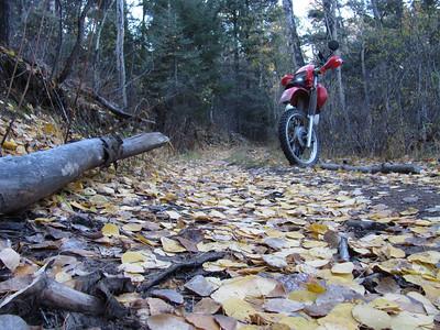 Jemez Mtns. - Locked Gates Ride; Ponderosa-Lazy Ray Ranch Hike-Pipeline Rd.-Porter's Landing DS Ride  10-15-12