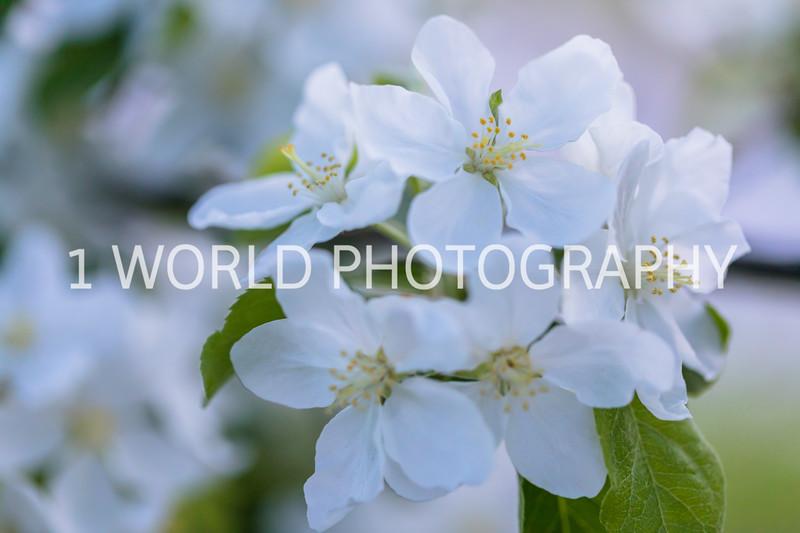 201905152019 Neighborhood Blossoms077--151.jpg
