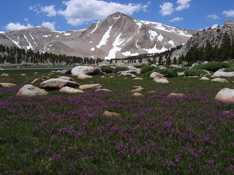 Cirque Peak (12900 ft / 3932 m) with flowers carpet