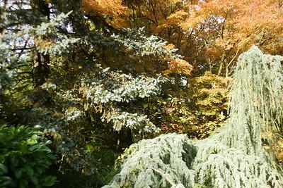 Julies Kubota Garden Walk