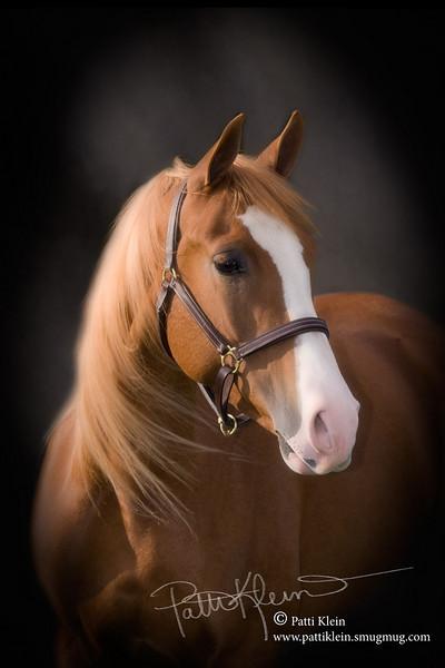 Portfolio Equine