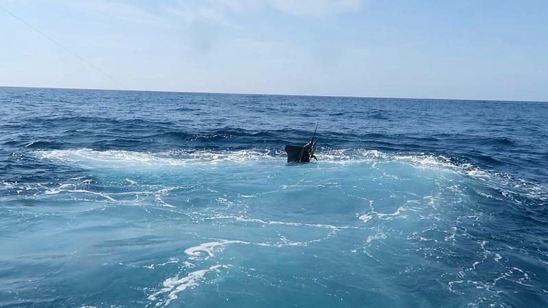 scottSailfish2.jpg
