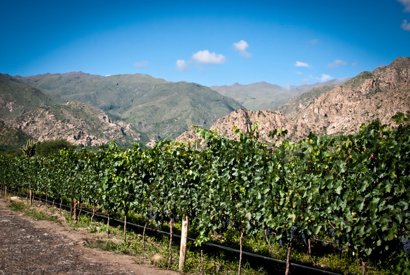 Cafayate 201203 Amalaya Wine (22).jpg