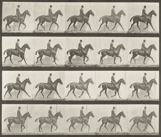 Eadweard Muybridge , Human & Animal Locomotion