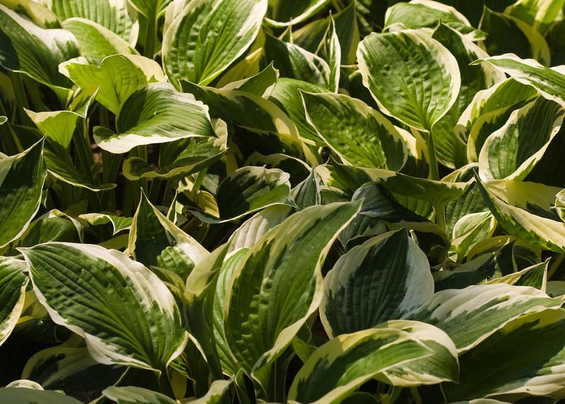 2009 06 30_NY Botanical Gardens_0658_edited-1.psd