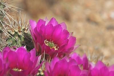 Wildflowers & Cactus